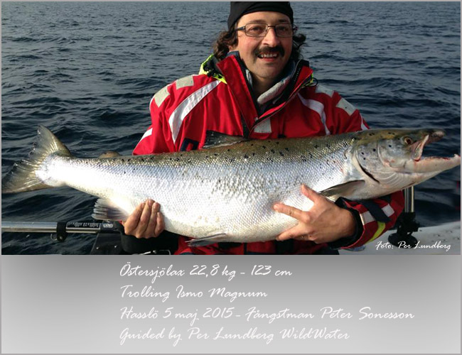 östersjölax 22,8 kilo 5 maj 2015 guided by per lundberg wild water fishing