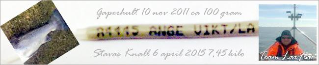 floy tag vänerlax lax trolling vänern carlin stavas knall 6 april 2015