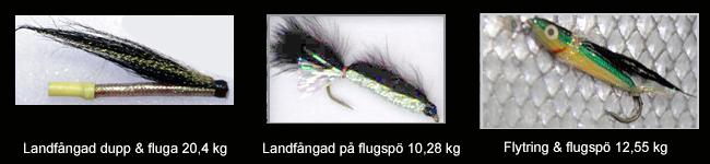 flugorna med stor F Vätterlax