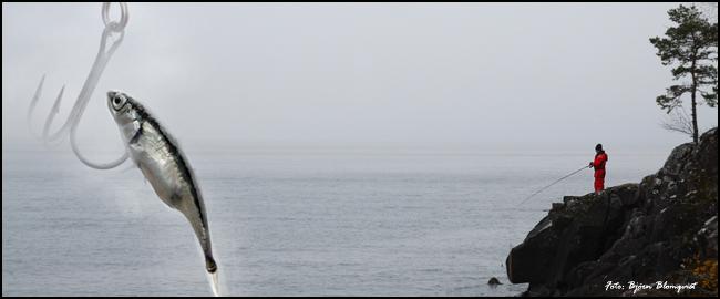 spigg spiggfluga landfiske laxfiske klippfiske vättern outdoor björn blomqvist