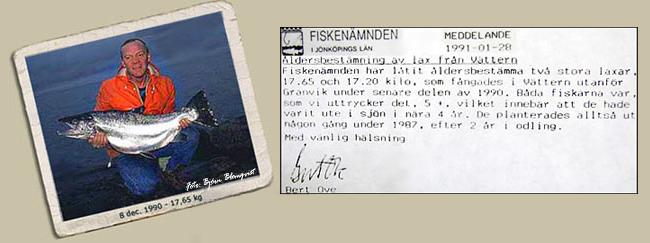 tillväxt lax vättern ålder på en fisk 17,65 kg var 5,5 år 8 dec 1990
