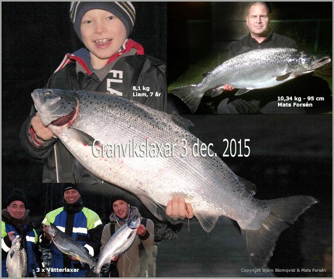vätterlax lax trolling granvik 3 dec 2015 outdoor björn blomqvist