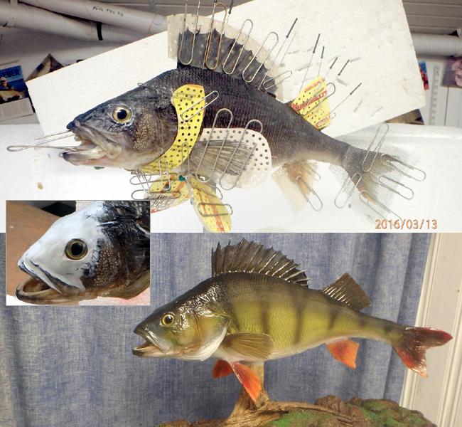 skinnmontering abborre frasses fiskmontering