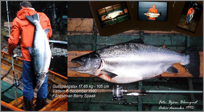 8-december-1990-rekordlax-vattern-lax-insjolax-gullspangslax-1990-trolling-berry-spaak-outdoor-bjorn-blomqvist