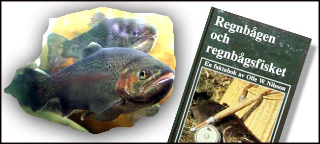 regnbagsoring-regnbage-put-and-take-odlad-fisk-flugfiske-regnbagsfiske