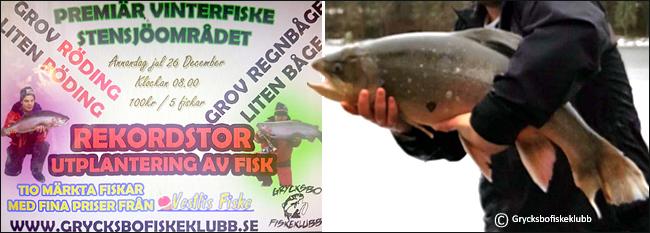rekordroding-roding-10-12-kilo-isfiske-grycksbo-sportfiskeklubb-26-december-2016-vestlis-fiske