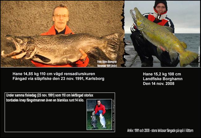 tyngsta-spofangade-leklaxarna-vattern-gullspangslax-insjolax-trolling-landfiske-outdoor-bjorn-blomqvist
