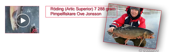 roding-7288-gram-artic-superior-ove-jonsson-stensjoomradet-grycksbo-sportfiskeklubb-put-and-take-vinterfiskepremiar-2016