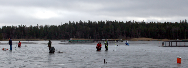 regnbåge isfiske kassodling fiskdöd fiskodling ismete ugglebo vänern 2017