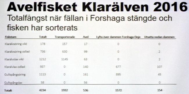 avelsfisket 2016 forshaga outdoor björn blomqvist