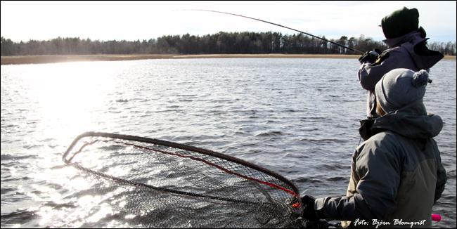no 1 pikefishing spring 2017 sweden outdoor bjorn blomqvist vårfiske gädda