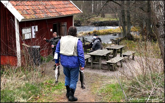 01 Baltak strömfiske Tidan april 2017 Bälteberga regnbåge öring put and take outdoor björn blomqvist