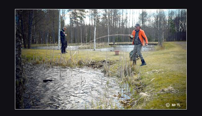 Bergets Sportfiske sportfiskeanläggning jätteregnbåge regnbåge lax gullspångslax