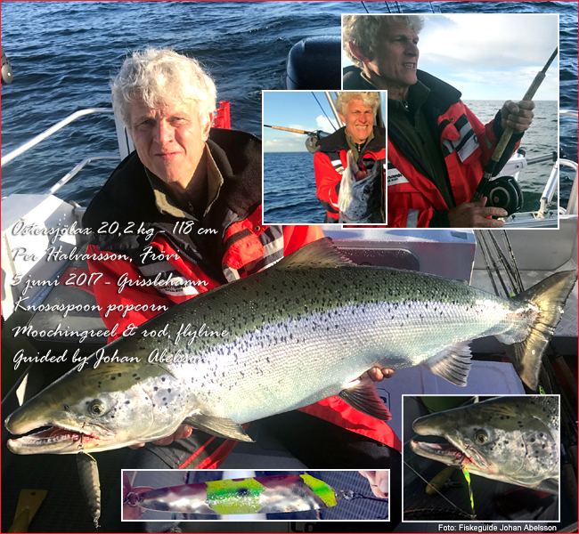 01 big atlantic salmon baltic sea 20 kilogram 45 lbs sweden mooching per halvarsson johan abelsson june 2017 outdoor bjorn blomqvist