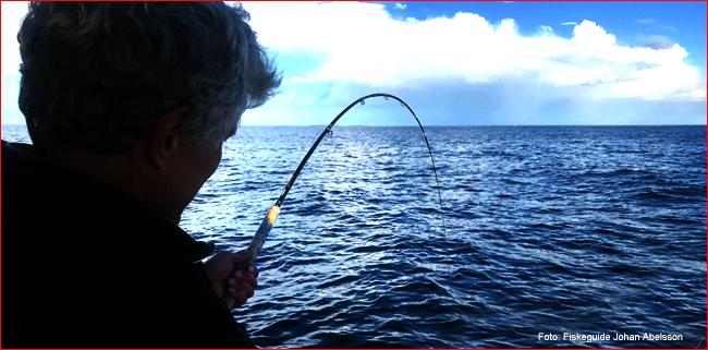 mooching rod reel big 45 lbs atlantic salmon baltic sea sweden fishing guide johan abelsson