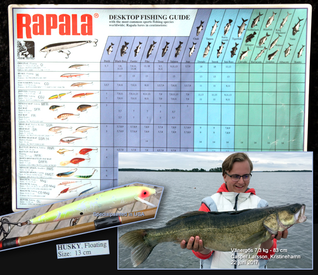 vintage Rapala Husky 13 floating made of balsa walley zander pikeperch 17 lbs sweden 22 june 2017
