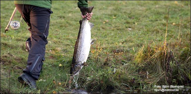 01 Berget Sportfiske lax gullspångslax flugfiske outdoor.se björn blomqvist