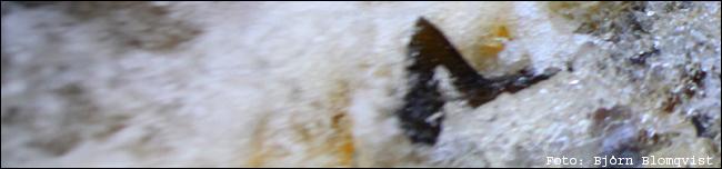 02 vätteröring leköring öring insjööring lekfisk lekgrop björn blomqvist