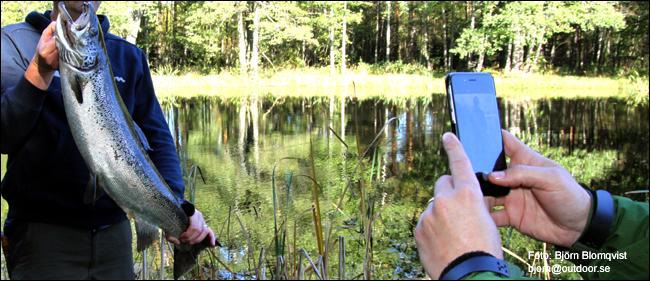 05 Berget Sportfiske lax gullspångslax flugfiske outdoor.se björn blomqvist