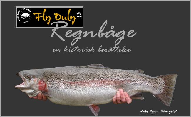 Regnbåge i sverige vild regnbågsöring lekfisk fly only magazine nr 3 2017