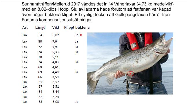 klippt bukfena gullspångslax gammelkroppa lax sävenfors fiskodling trolling vänern sunnanåträffen mellerud 2017 björn blomqvist