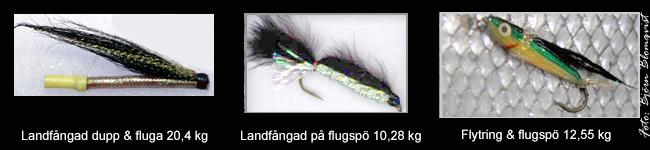 rekordlax vättern tubfluga laxflugor vätterlax landfiske gullspångslax outdoor björn blomqvist