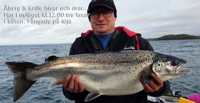 åberg krille tre laxar i båten laxcup vättern 2017