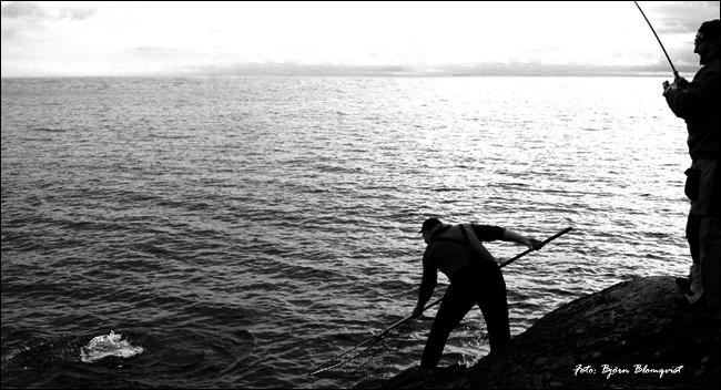 05 gullspångslax vätterlax lax vättern kustfiske outdoor björn blomqvist