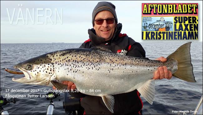 vänermästare lax petter larsson gullspångslax trollingfiske vänern rekordlax 2007