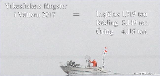 nätfiske-yrkesfiske-laxfisk-2017-lax-röding-öring-outdoor-björn-blomqvist-trolling-trollingfiske