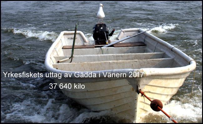yrkesfiske vänern 2017 gädda 37 ton gäddfiske björn blomqvist