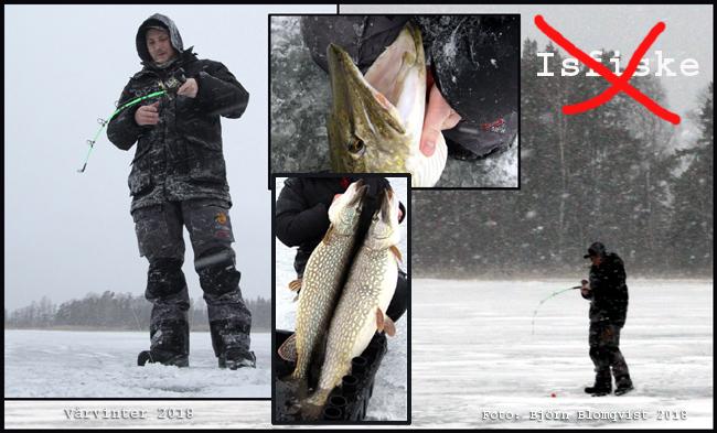 ismete stor gädda våren 2018 big pike sweden icefishing bjorn blomqvist outdoor