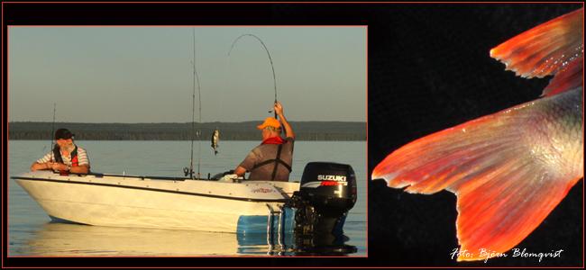 jigg jigga abborre gummijigg haspelfiske tunn lina björn blomqvist outdoor sommarfiske