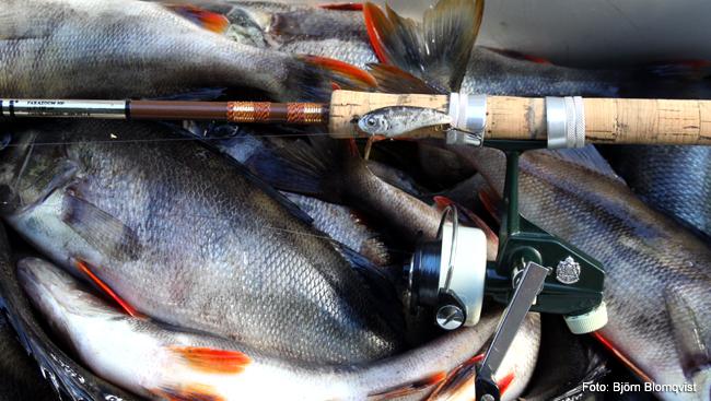 cardinal 33 parazoom 300 ul fiske quickly ultralätt bete outdoor björn blomqvist