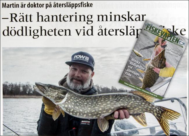 våra fiskevatten nr3 2018 catch release återsläppsfiske gädda dödlighet 5 procent