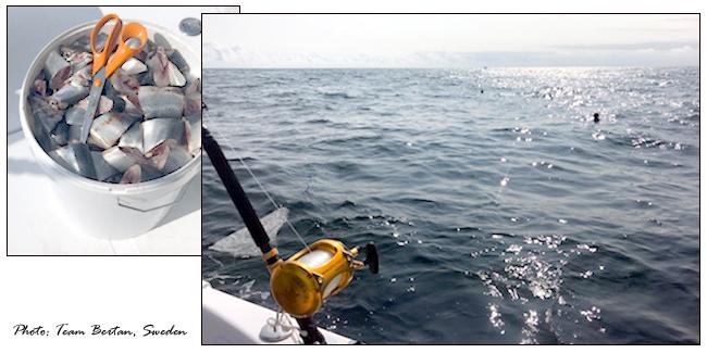 2 team bertan sweden bluefin tuna beason boat outdoor.se bjorn blomqvist