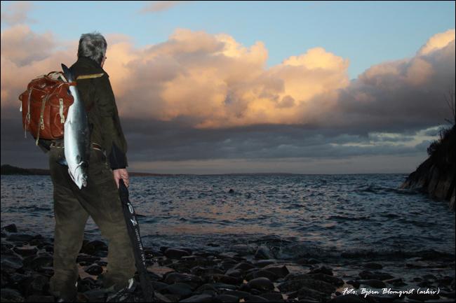 kustfiske gullspångslax klarälvslax vättern outdoor.se björn blomqvist