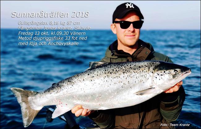 8160 gram 87 cm gullspångslax jonas krantz sunnanåträffen 2018 vänern trollingfiske rekordfisk