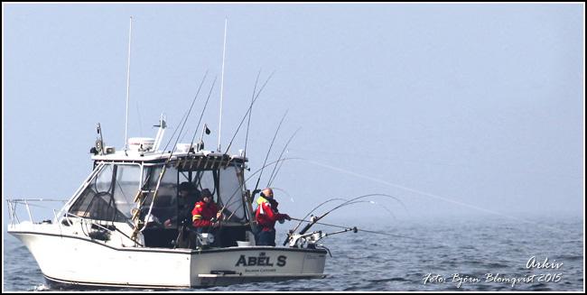 big salmon fishing outdoor-Abel-Salmon-Fishing-Baltic-Sea-Photo-Bjorn-Blomqvist
