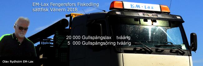 smolt-vänern-EM-lax-Fengersfors-fiskodling-2018-gullspångslax-gullspångsöring